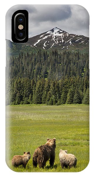 Grizzly Bear Mother And Cubs In Meadow IPhone Case