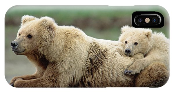 Mp iPhone Case - Grizzly Mother And Son by Yva Momatiuk John Eastcott