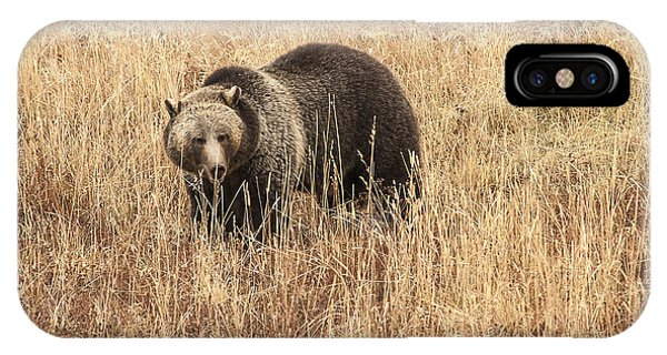 Grizzly In Autumn Meadow Phone Case by Bob Dowling