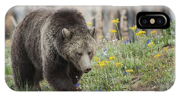 Grizzly In Spring Flowers Phone Case by Bob Dowling
