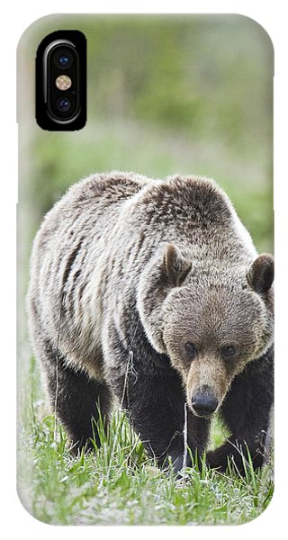 Grizzly Looking For Flowers To Eat IPhone Case