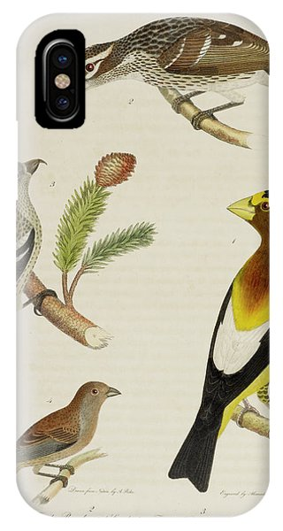 Grosbeak And Crossbill IPhone Case