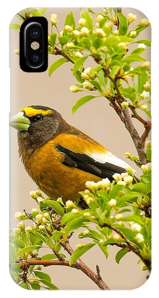 Grosbeak IPhone Case
