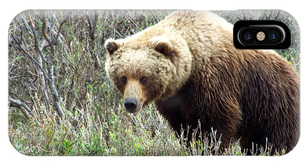 IPhone Case featuring the photograph Grouchy Grizzly by Barbara Von Pagel