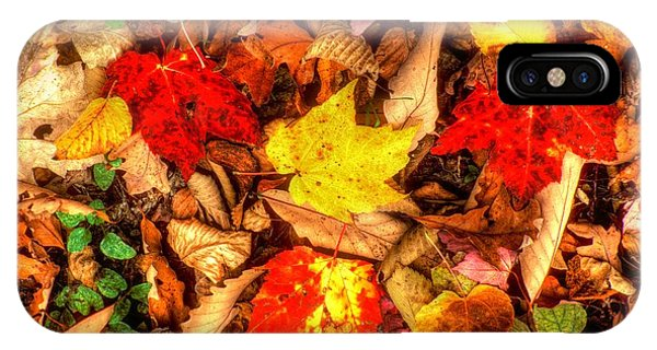 Catoctin Mountain Park iPhone Case - Ground Bouquet No. 2 - Cunningham Falls State Park Frederick County Maryland - Autumn by Michael Mazaika