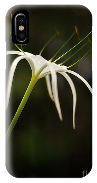 White Spider Flower IPhone Case