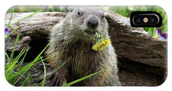 Groundhog iPhone Case - Groundhog  Kit Marmota Monax by Debbie Dicarlo