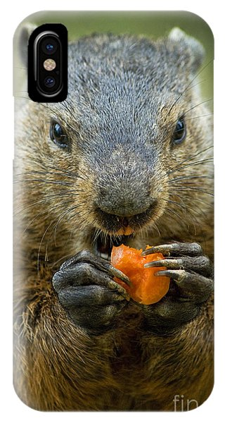 Groundhog iPhone Case - Groundhogs Favorite Snack by Paul W Faust -  Impressions of Light