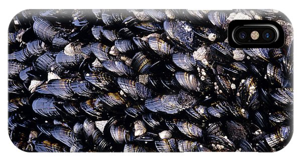 Group Of Mussels Close Up IPhone Case