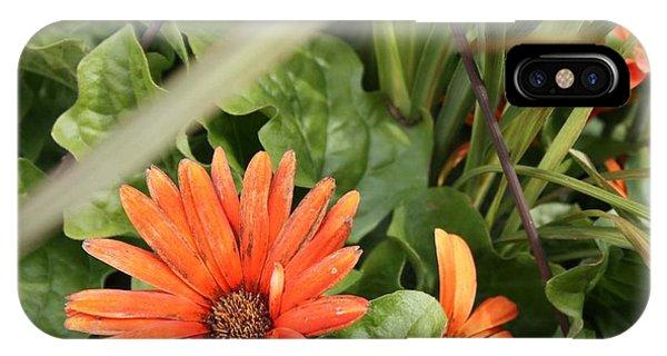 Group Of Orange Daisys IPhone Case