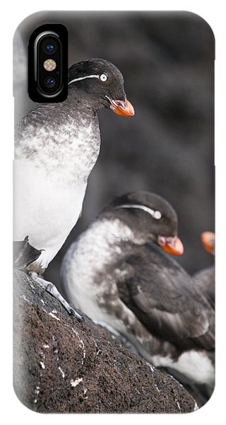 Auklets iPhone Case - Group Of Parakeet Auklets, St. Paul by John Gibbens