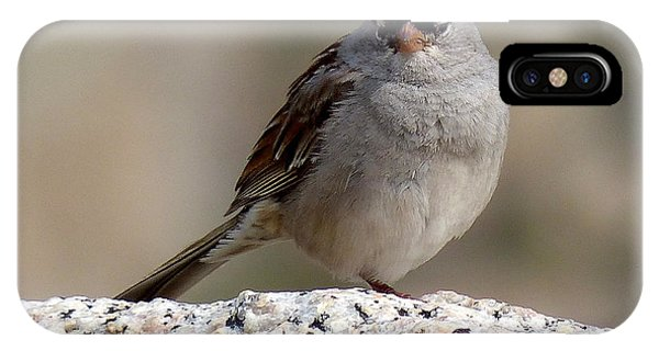 Grumpy White Crowned Sparrow IPhone Case