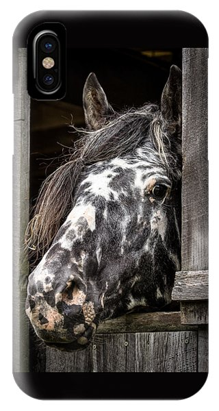Guard Horse-what's The Password? IPhone Case