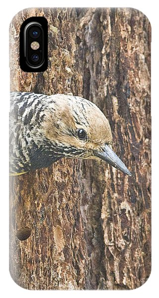 Guarding The Nest Phone Case by Bob Dowling