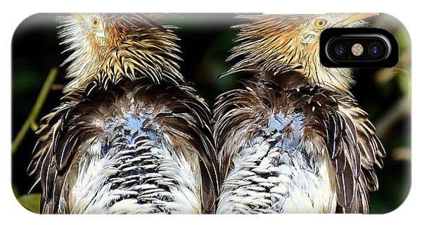 Guira Cuckoos IPhone Case