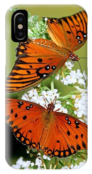 Agraulis Vanillae iPhone Case - Gulf Fritillary Butterflies by Millard H. Sharp