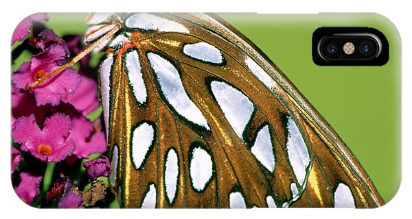 Agraulis Vanillae iPhone Case - Gulf Fritillary Butterfly Agraulis by Millard H. Sharp