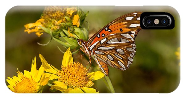 Agraulis Vanillae iPhone Case - Gulf Fritillary Butterfly by Gregory G. Dimijian, M.D.