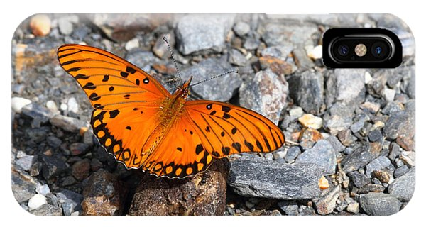 Agraulis Vanillae iPhone Case - Gulf Fritillary Butterfly by James Brunker