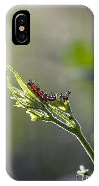 Agraulis Vanillae iPhone Case - Gulf Fritillary Caterpillar Macro On Green Leaves by Brandon Alms