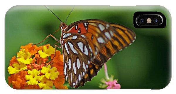Gulf Fritillary IIi IPhone Case