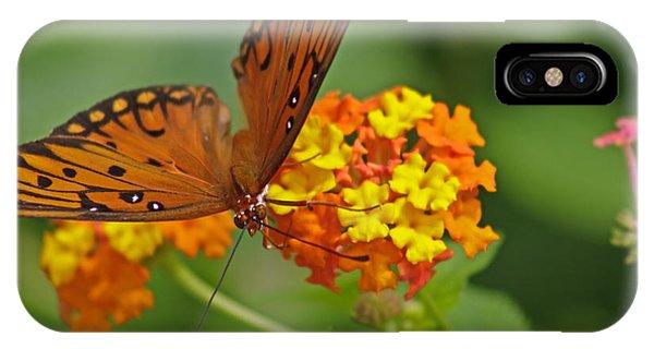 Gulf Fritillary Iv IPhone Case