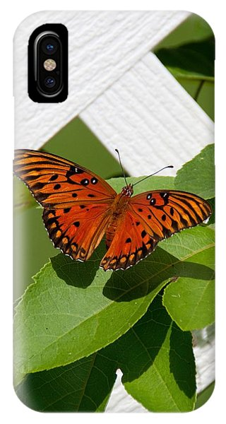 Gulf Fritillary On Passion Flower Vine IPhone Case