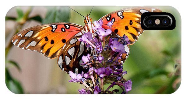 Gulf Fritillary On Purple Buddleia IPhone Case