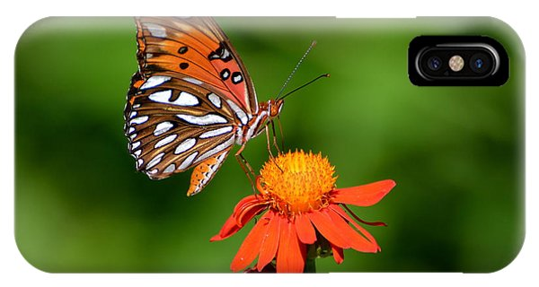 Gulf Fritillary Underwing IPhone Case