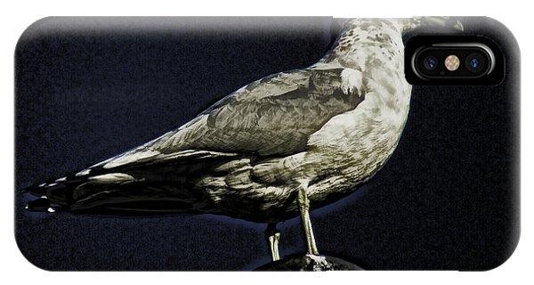 Gull At Sundown Phone Case by Joe Bledsoe