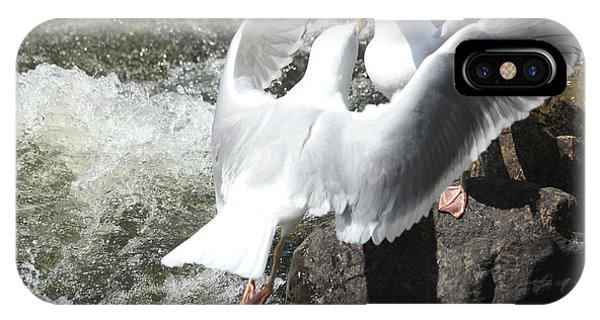 Gull Greeting IPhone Case