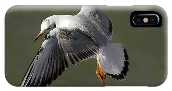 Gull In Flight IPhone Case