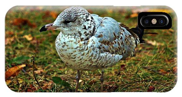 Gull IPhone Case
