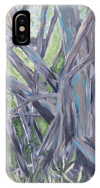 Gumbo Limbo Park Banyan Tree IPhone Case