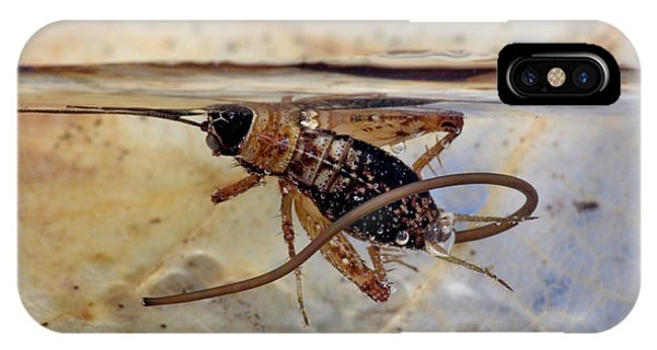 Drown iPhone Case - Hairworm And Wood Cricket by Pascal Goetgheluck/science Photo Library