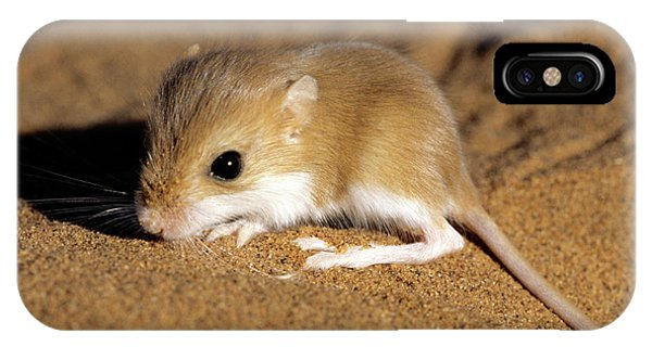 Hairy-footed Gerbil Phone Case by Louise Murray/science Photo Library