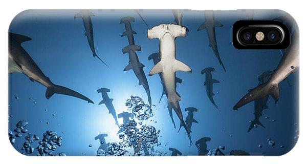 Dive iPhone Case - Hammerhead Shark by Barathieu Gabriel
