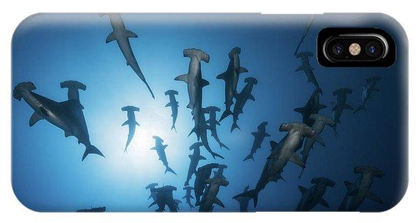 Underwater iPhone Case - Hammerhead Shark - Underwater Photography by Barathieu Gabriel