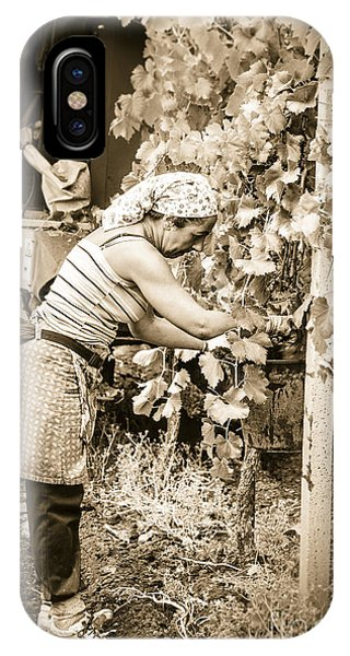 Hand Pickers Following The Mechanical Harvester Harvesting Wine  IPhone Case