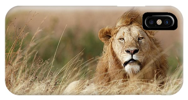 Lions iPhone Case - Handsome! by Ali Khataw