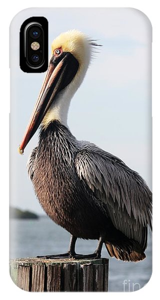 Pelican iPhone Case - Handsome Brown Pelican by Carol Groenen