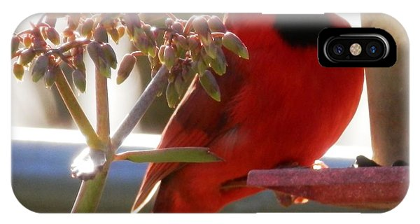 Handsome Red Male Cardinal Visiting IPhone Case