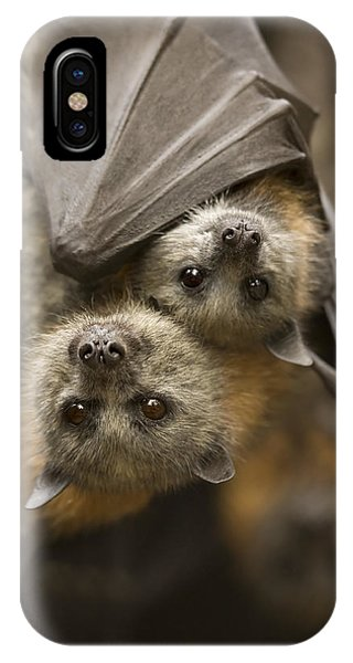 Bat iPhone Case - Hang In There by Mike  Dawson