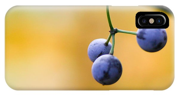 Blue Berry iPhone Case - Hanging Berries by Shane Holsclaw