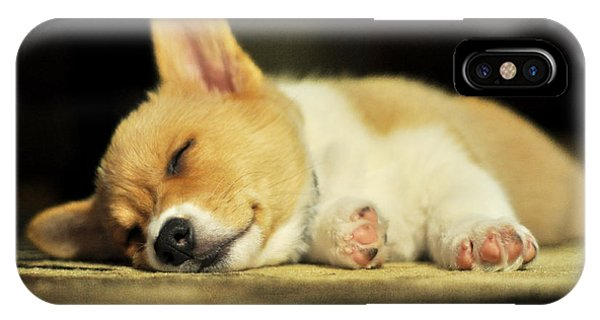 Happiness Is A Warm Corgi Puppy IPhone Case