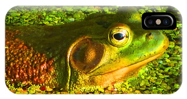 Happy As A Frog In A Pond IPhone Case