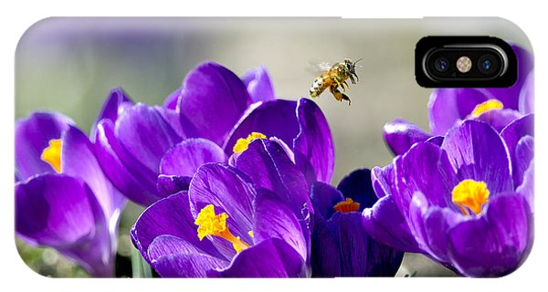 Honeybee iPhone X Case - Harbinger Of Spring by Sharon Talson
