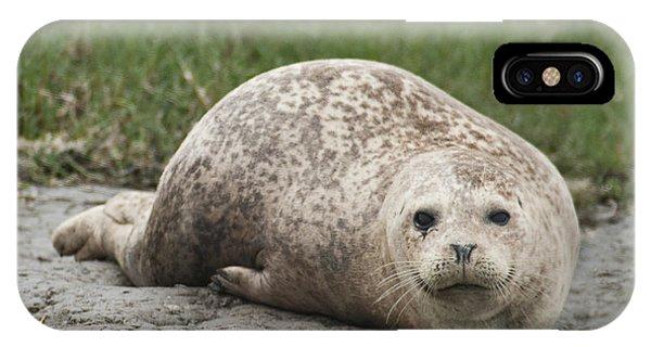 Harbor Seal IPhone Case
