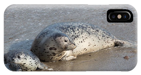 Harbor Seals In The Surf IPhone Case