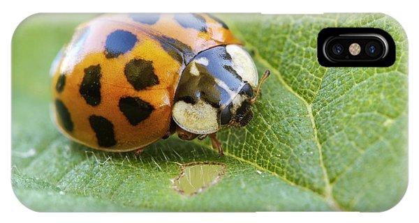 Harlequin Ladybird IPhone Case